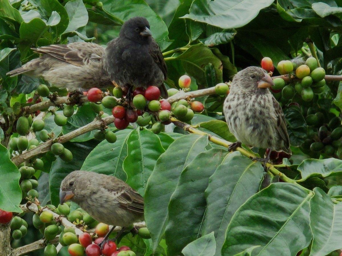 Bird friendly (отглеждан на сянка) е кафе, което расте в Колумбия.